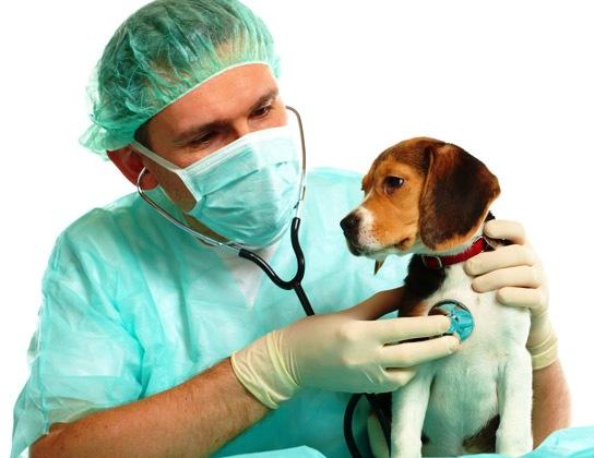 visita-al-veterinario