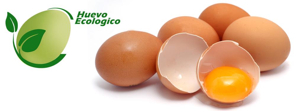 Huevos ecologicos dim