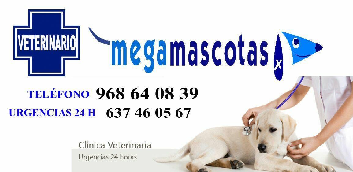 megamascotas general